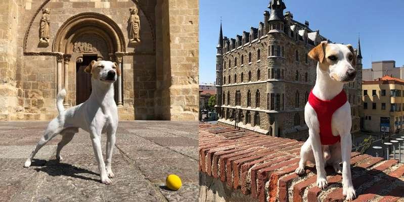 Собака-инфлюэнсер Пиппер путешествует по Испании в поисках мест 'dog friendly'