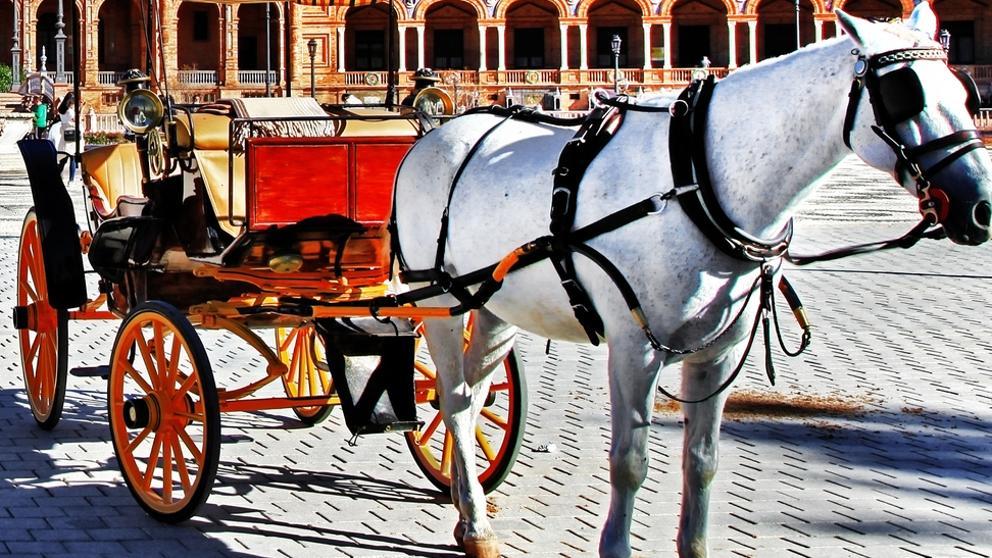 В Барселоне запретили поездки на повозках, запряженных лошадьми