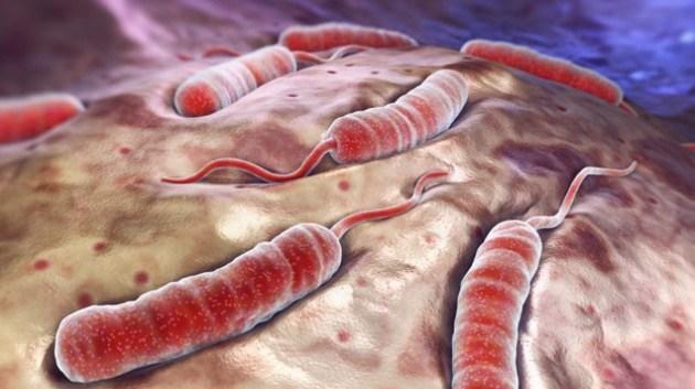 Роспотребнадзор предупредил туристов о вспышке холеры в 26-ти странах