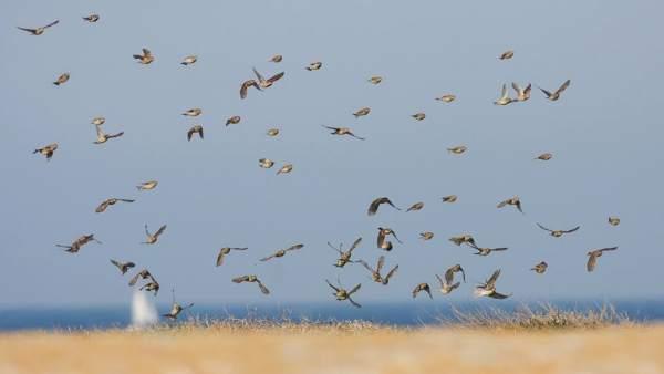 Испания – лучшая страна для наблюдения за птицами