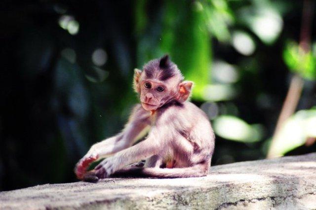 Путешествие мечты на Бали с Туристическим клубом