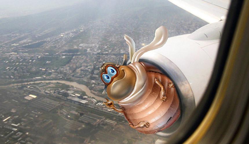 В двигатели самолётов запустят «жуков» и «змей»