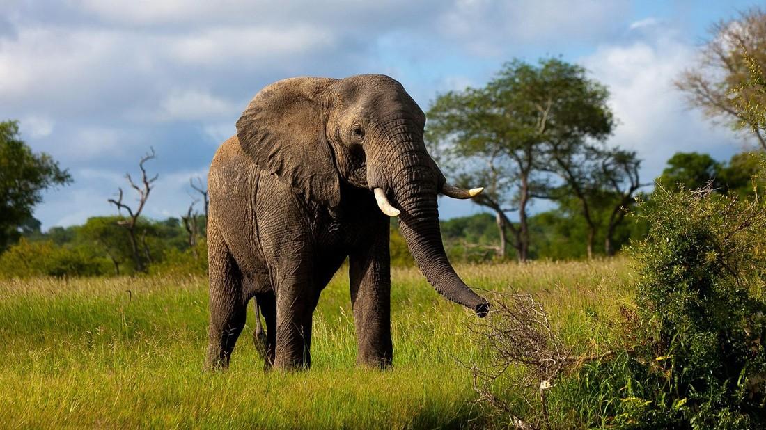 Защитники животных запретили туристам кататься на слонах во Вьетнамском парке