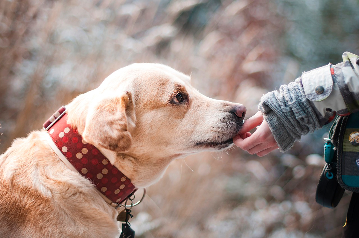 Зоозащитники в Галисии назначили вознаграждение за сведения о виновных в жестоком обращении с животными