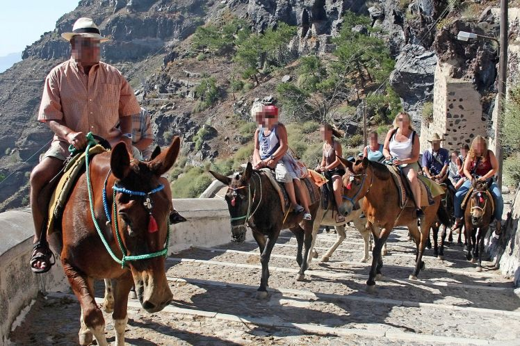 На Санторини решили вывести новую породу ослов для особо жирных туристов