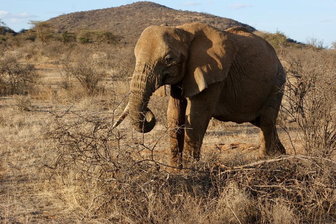 Отель в Кении заплатит туристу за убитую слоном семью