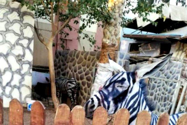 Зоопарку нужна зебра — там покрасили осла