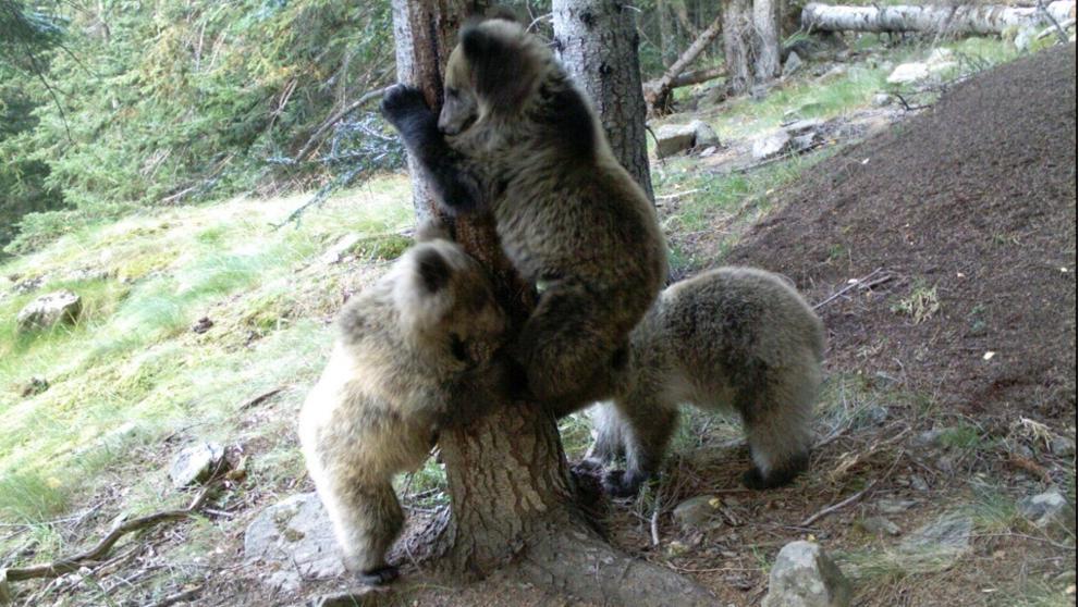 Группа туристов встретилась с семейством медведей в Аранской долине