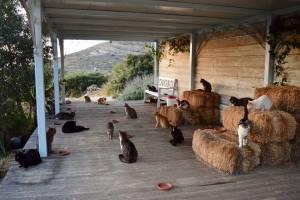 Жить в Греции, ухаживать за котами и получать 500 евро в месяц