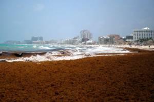 Мексиканцы нашли способ избавиться от водорослей на пляже