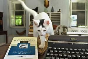 Названы 15 лучших достопримечательностей для любителей котиков