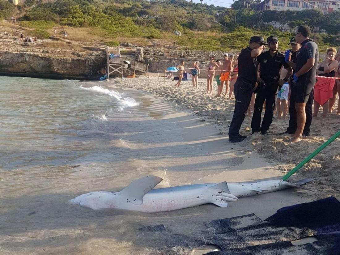 Акула напугала туристов на пляже Майорки