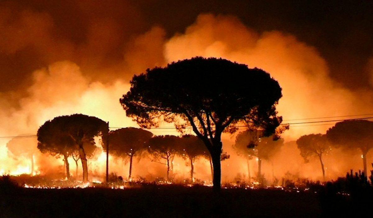 Под угрозой возникновения лесных пожаров находится вся территория Испании