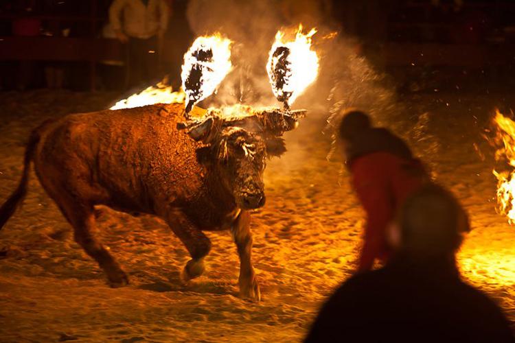 В Испании на фестивале разъярённый бык с горящими рогами растерзал туриста