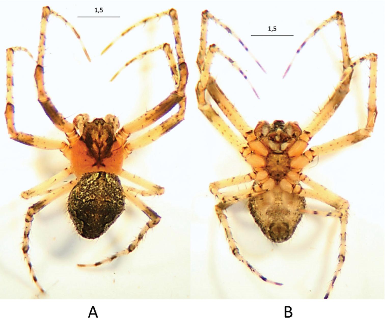 Новый вид паука был случайно обнаружен испанскими биологами