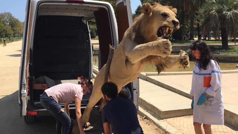 Полиция конфисковала чучело редкого африканского льва, которое пытались продать за €6000