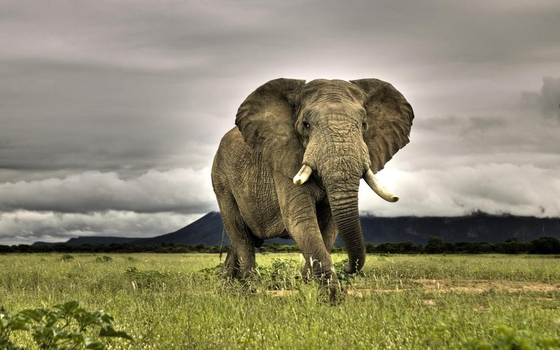 Шри-Ланка: разъяренный слон напал на машину с туристами