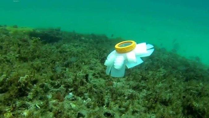 Медузы-дроны спасают коралловые рифы