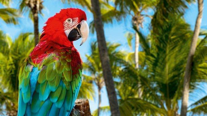 Вслед за перелетными птицами! Зимуем на солнечных Карибах