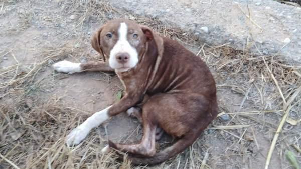 Уличная собака спасла от холода потерявшегося пожилого человека, страдающего от болезни Альцгеймера