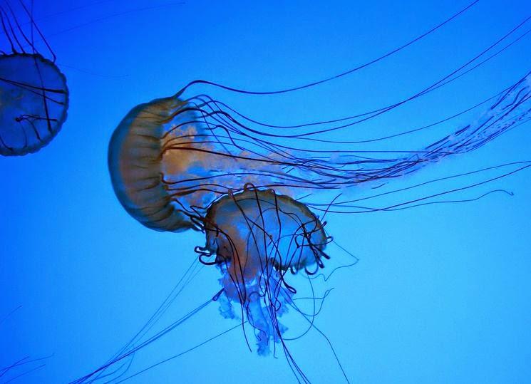 В Италии пляжи атаковали ядовитые медузы