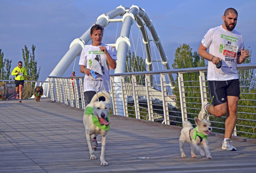 Традиционный забег с собаками состоится в Валенсии 30 сентября