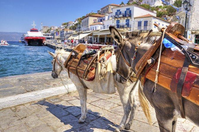 Вниманию полных туристов: на греческих ослах вам кататься запрещено