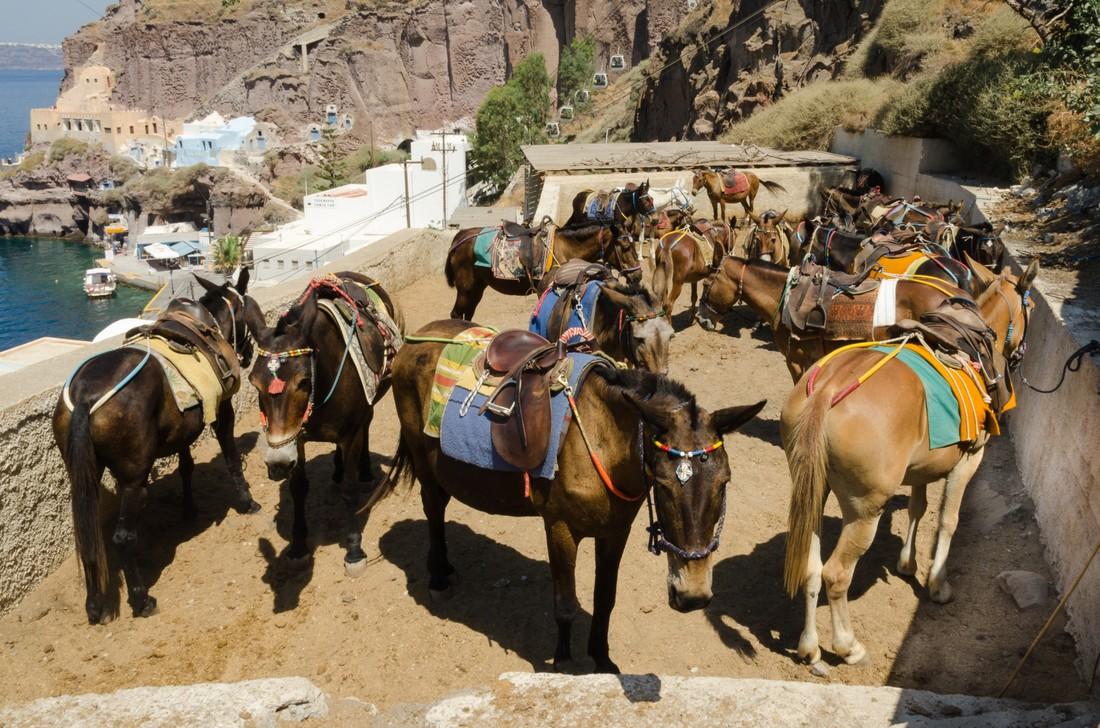Туристам с лишним весом запретили кататься на ослах на Санторини