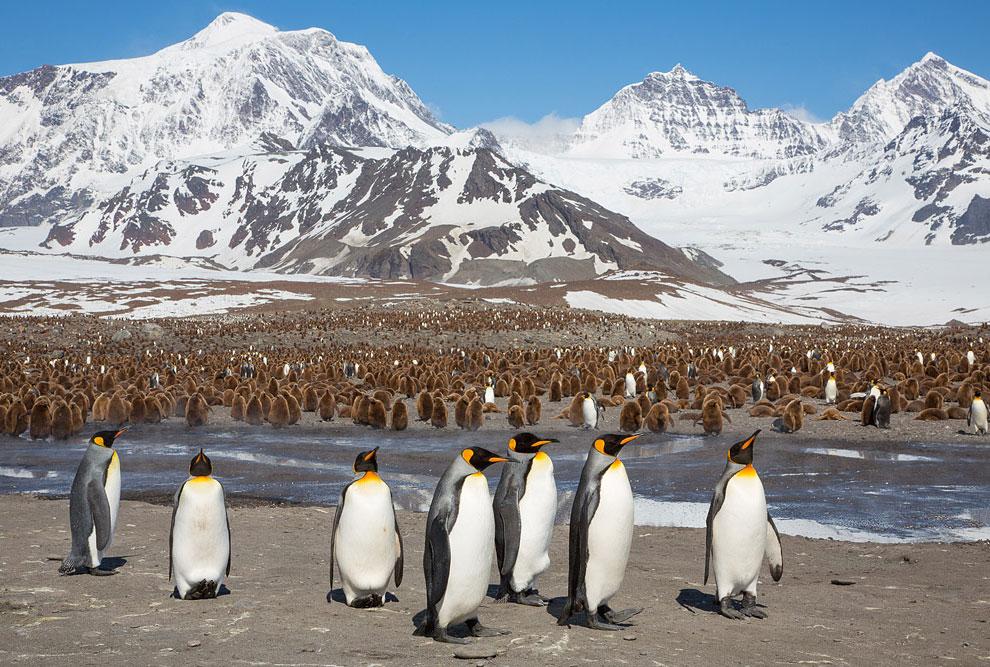 Туристов-мизантропов послали в Антарктику и на Эверест