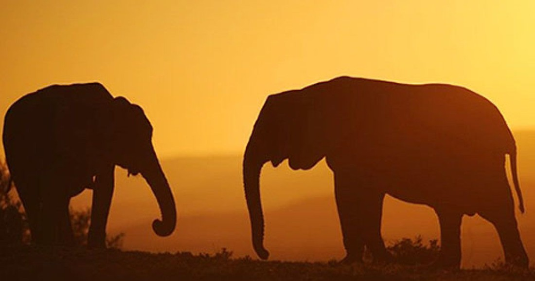 Слон опять напал на туристов в Индии