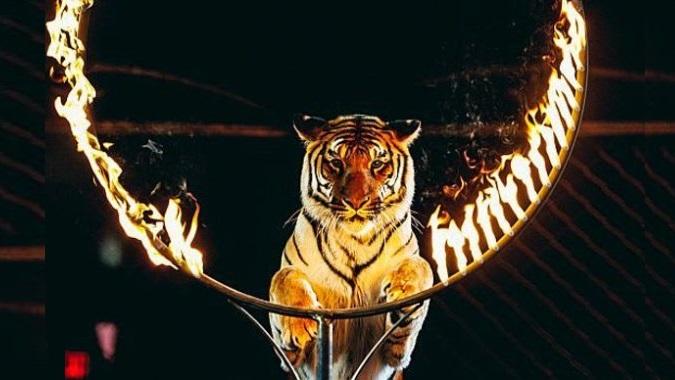 Еще одна страна Европы запретит диких животных в цирках