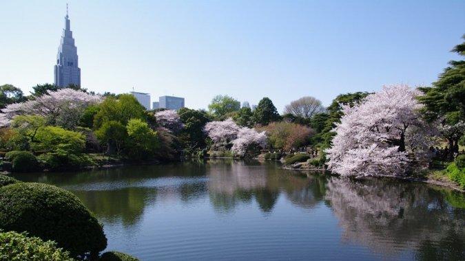 Кассир из Японии так боялся туристов, что не брал с них плату