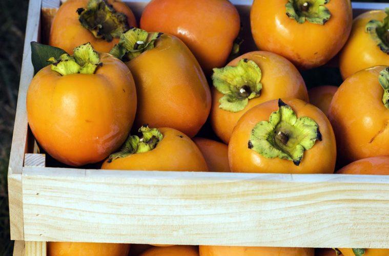 В Испании начинается сезон хурмы персимон