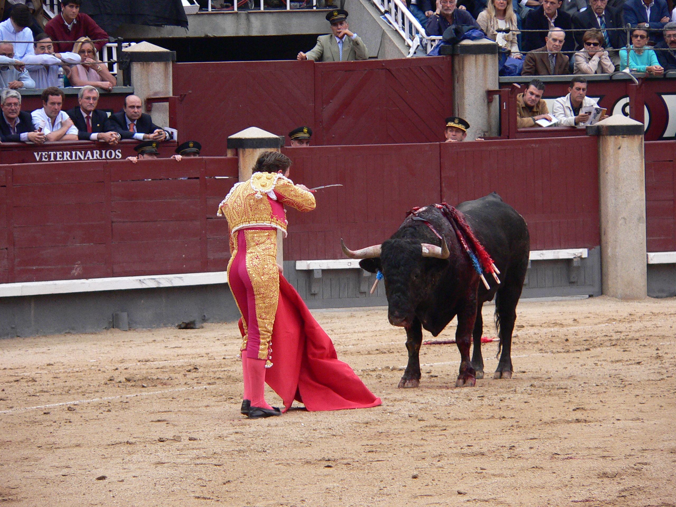 Останется ли коррида в Испании?