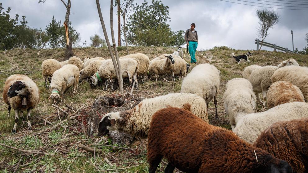 В Каталонии создан тренировочный лагерь для скотоводов