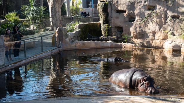 В зоопарке Барселоны хотят оставить только местные виды животных