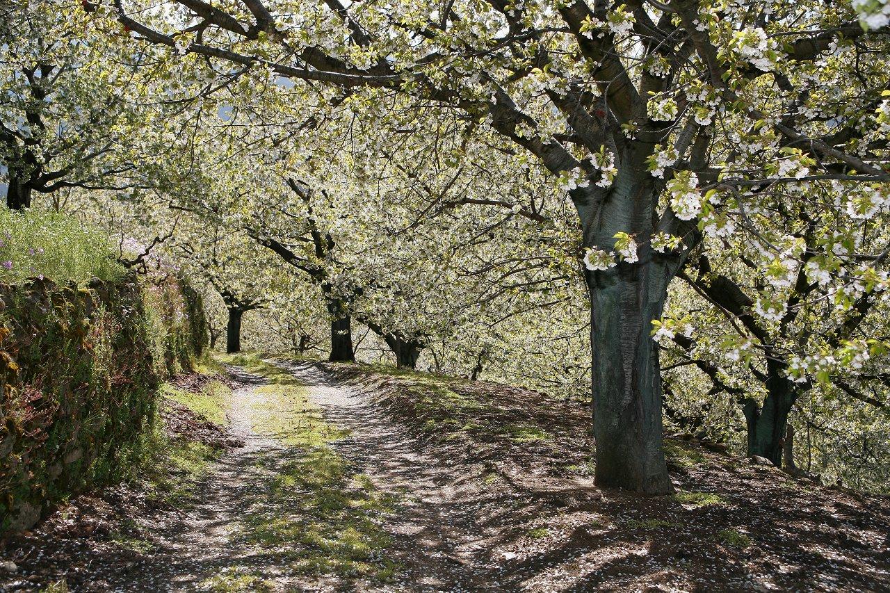 Весна пришла в Испанию на месяц раньше с температурами на 5–10 градусов выше нормы