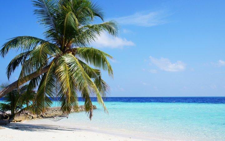 пальма на море