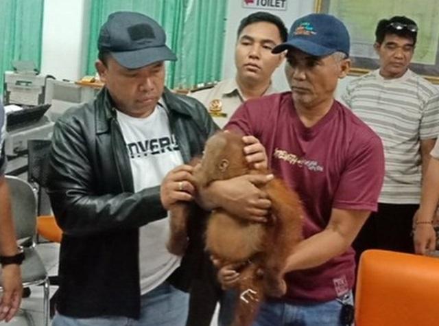 Российскому туристу грозит пять лет тюрьмы за контрабандного орангутана