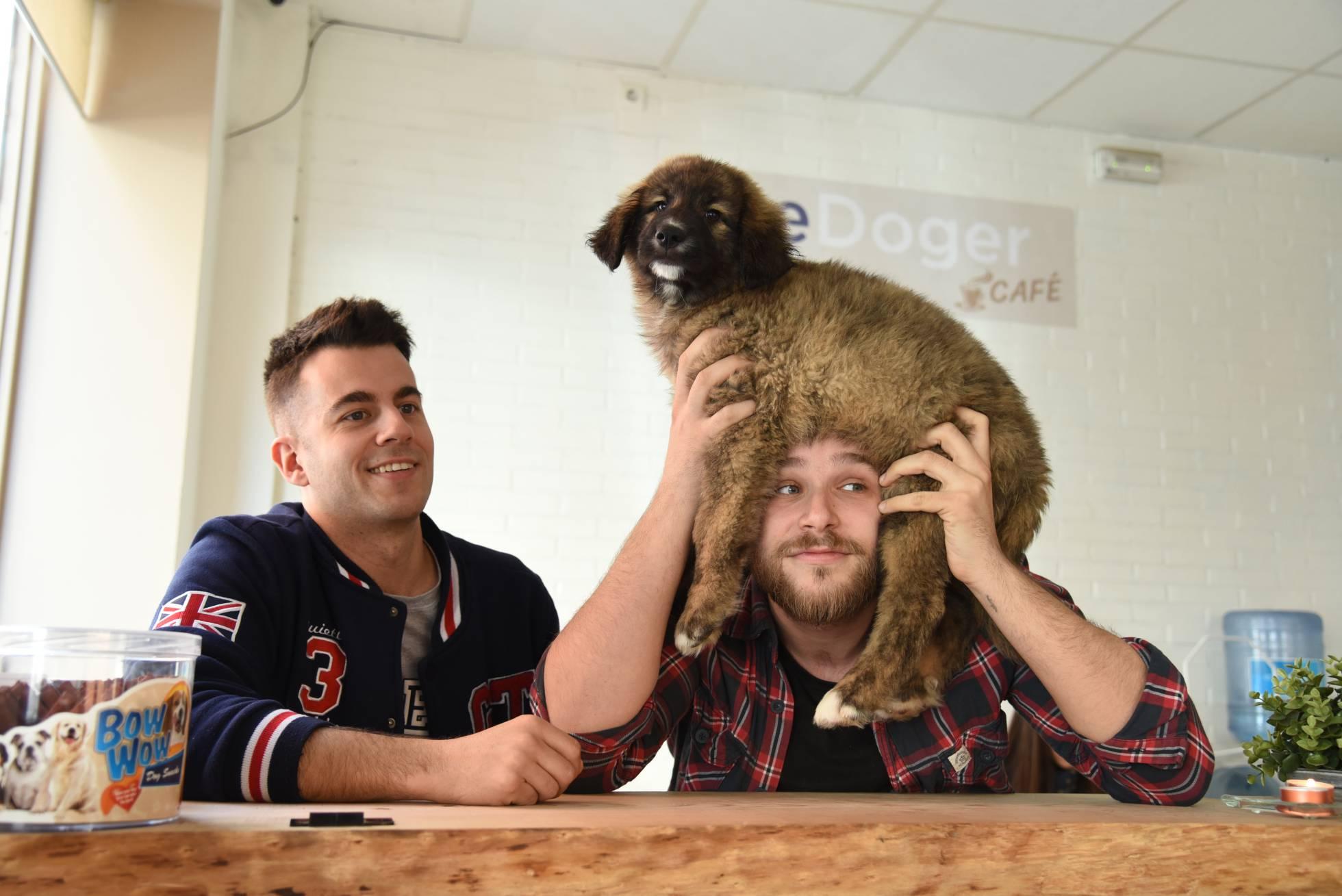 Первое кафе с собаками в Мадриде набирает популярность