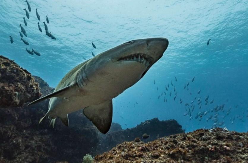 Акула убила туриста на Гавайях