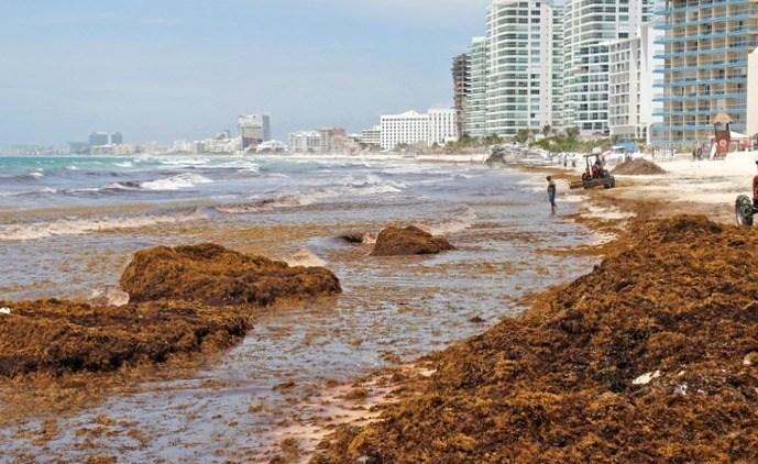 Туризму Мексики угрожает нашествие водорослей