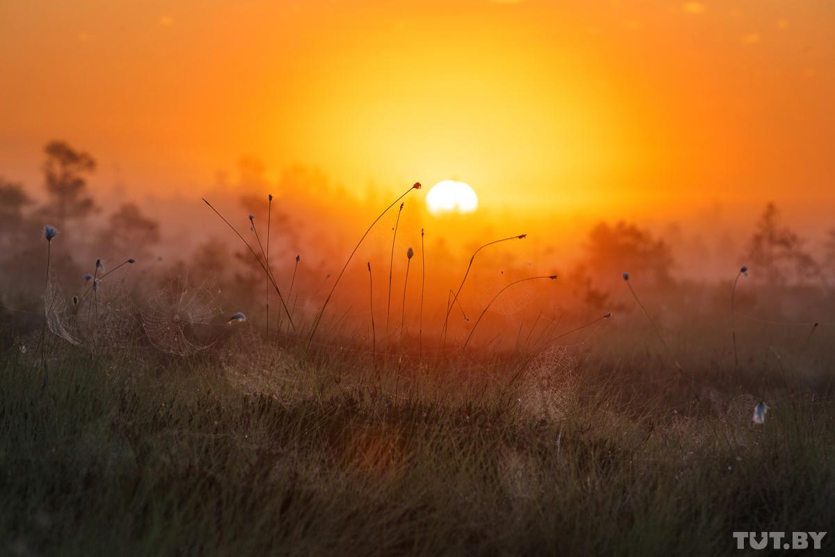 Фото: Виктор Малыщиц, TUT.BY