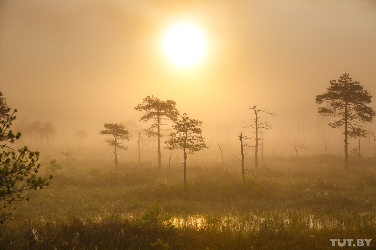 Отпуск на родине без комаров. Зачем туристы ездят на болото Ельня, и что там можно увидеть