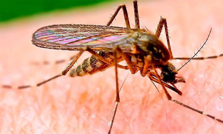 Роспотребнадзор предупредил туристов об «эпидемии лихорадки Денге» в Таиланде