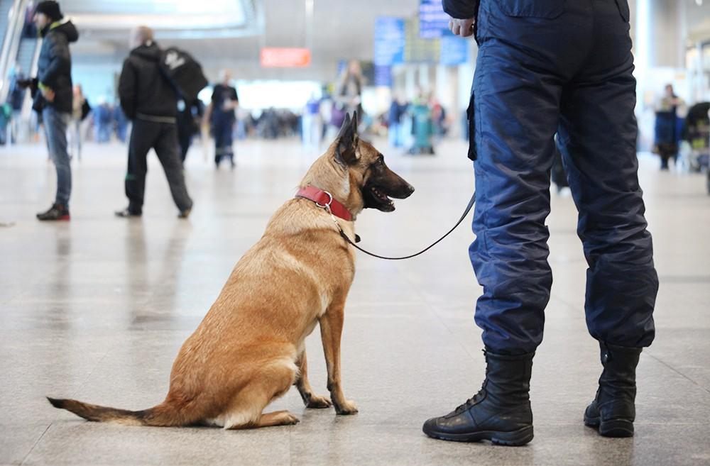 Вылеты туристов из Домодедово задержались из-за угроз о взрывах