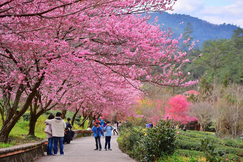 Японию посетили более 55 тыс. российских туристов