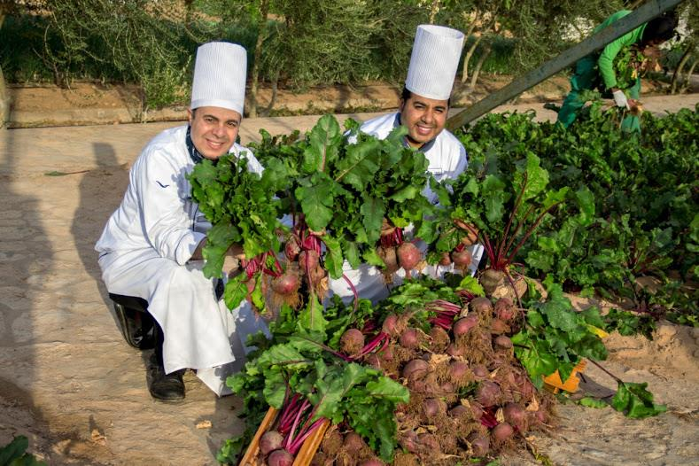 Сад-огород Mövenpick Sharm El Sheikh: пищевые отходы туристов идут в «зеленое» дело