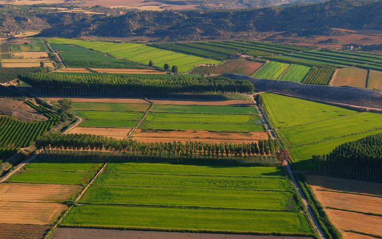Выращивание высокогорного риса в регионе Арагон