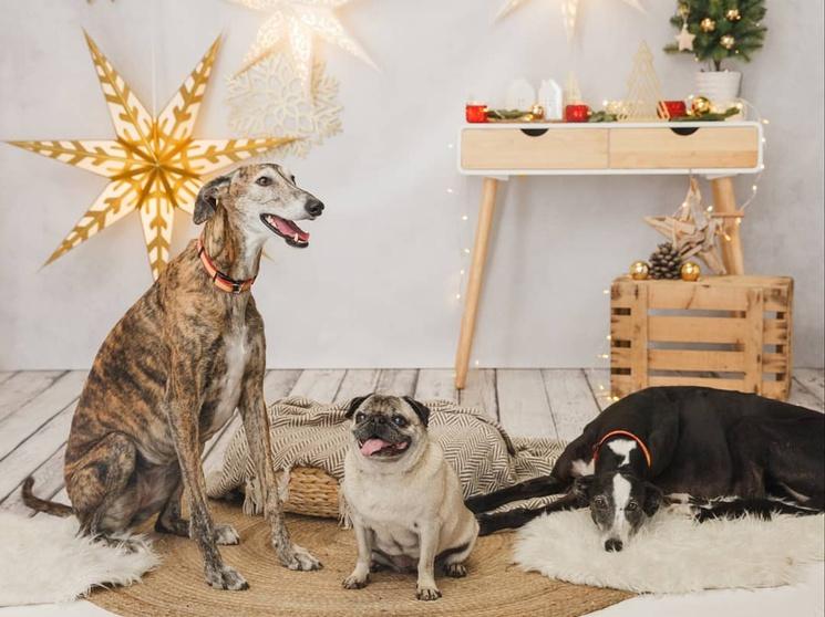 Альтернативные ярмарки для покупки рождественских подарков в Мадриде